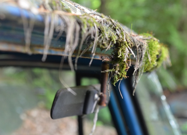 moss growing along the front of an old car