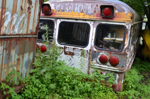 back of an old school bus with vines growing up behind it,