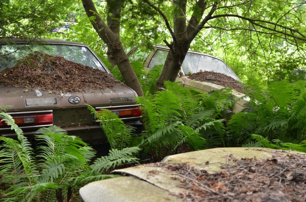 three cars parked around a tree, old and rusty carcasses of cars