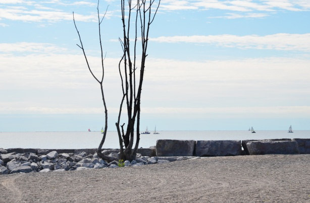 a lone small tree with no leaves on the shore, sand, large rocks to prevent erosion, beyond the tree is Lake Ontario with some sailboats on it