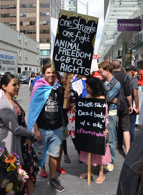 some people at a protest in front of Toronto's Chick Fil A restaurant on its opening day. One man is wearing a trans flag and holding a sign that says one fight for Animal freedom and LGBQT rights. a woman has a placard that says Chick Fil A, dead body with a side of homophobia