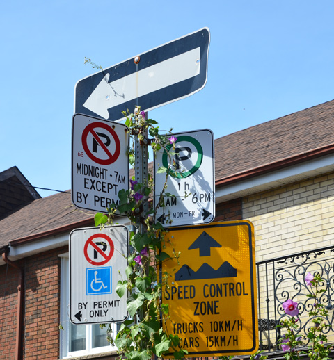 a street sign pole with morning glory flowers and vine growing up it, one way sign, speed control zone sign, no parking signs,