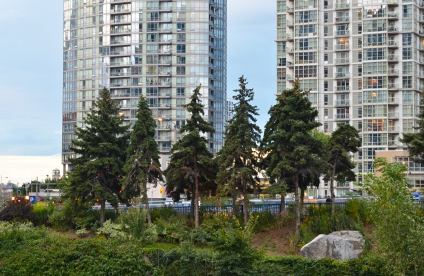 trees in a small park along the side of the railway tracks, condos behind