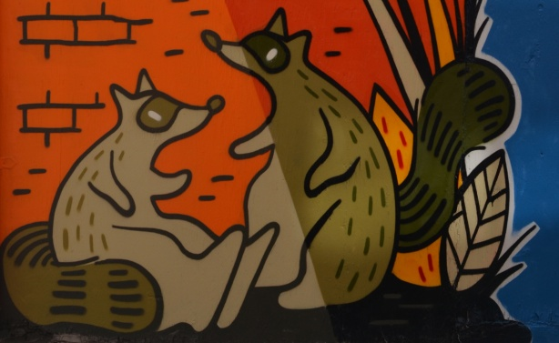 two raccoons from a mural by Emily May Rose,