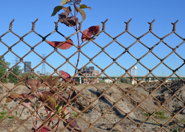 a plant grows up agains a chain link fence, pile of dirt and industrial buildings behind the fence