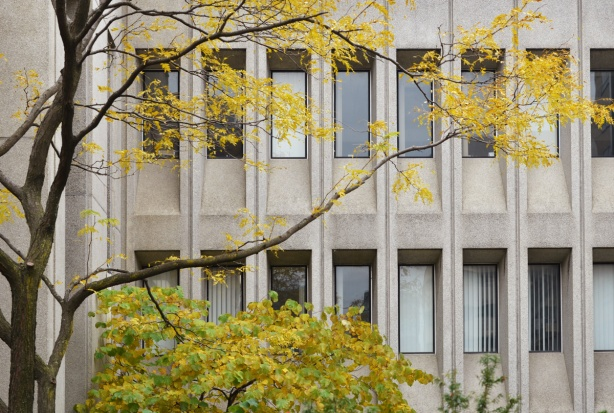 tree with a few remaining yellow leaves in front of a concrete building with long vertical recessed windows