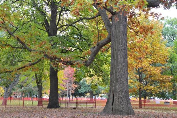 autumn trees in Queens Park