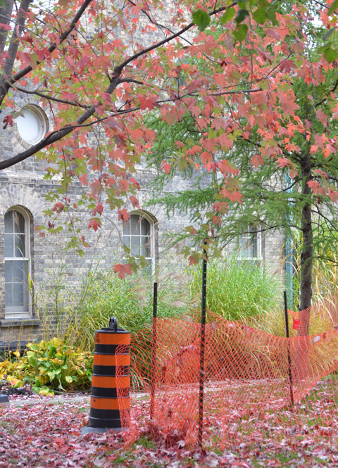 orange plastic fence, orange and black cone, and autumn trees in a corner of U of T campus