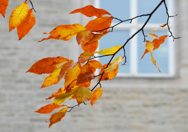 yellow and orange leaves in front of a grey stone building