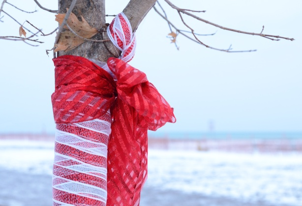 ribbons tied around a small tree trunk and branch, one red ribbon and one red and white striped ribbon, Christmas decorations