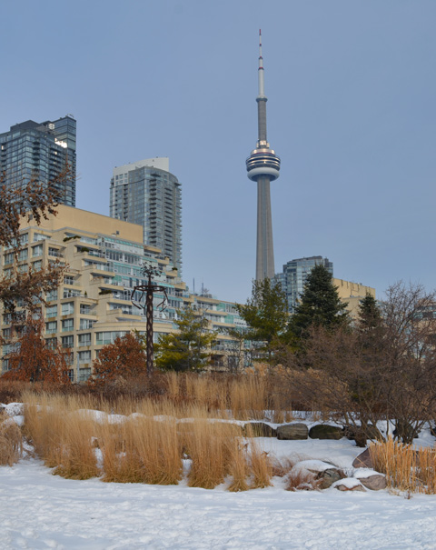 along the waterfront, view of CN Tower, with sculpture and dead or hibernating plants at Music Garden