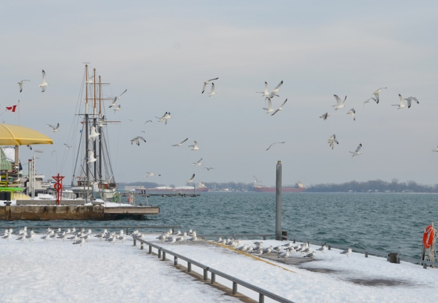 a large flock of sea gulls take flight beside Lake Ontario and in front of H T O beach