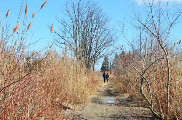 a couple walking together on a path at park, with tall grasses and leafless bushes beside