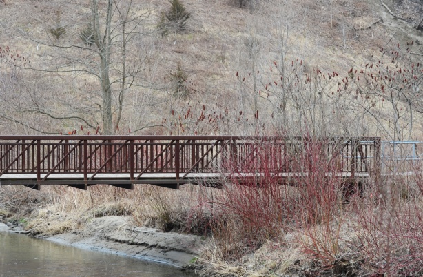 bridge over creek, sumach and dogwood bshes, winter to early spring, no leaves