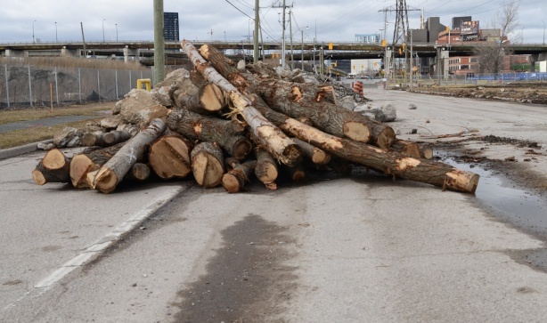 a pile of tree trunks, recently cut down, on a road that is now closed