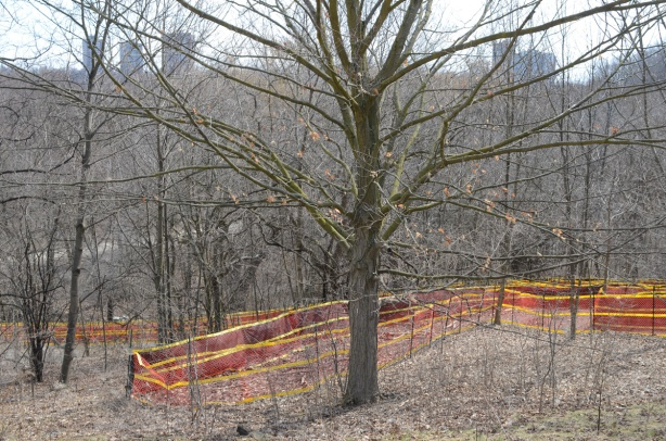 orange plastic fencing around site where a new path and trail are being made down the side of a hill with lots of trees, early spring, no leaves