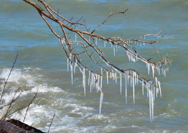 icicles on a branch that overhangs Lake Ontario