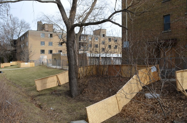plywood fence around trees to protect them from construction and demolition, on walkway beside 166 Sheppard Ave East