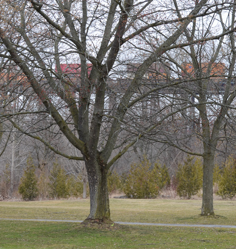 park and trees in the foreground, early spring, with train on bridge in background