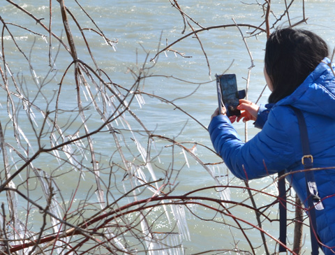 a woman with black hair and wearing a blue winter coat is taking picture of icicles with her phone