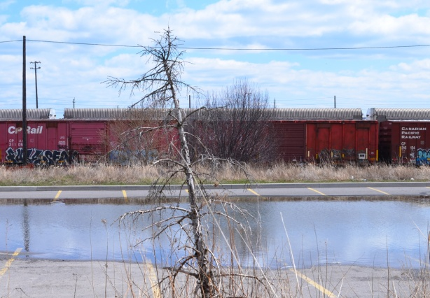 a small dead pine tree in front of a large puddle in a parking lot, a line of red boxcars behind it