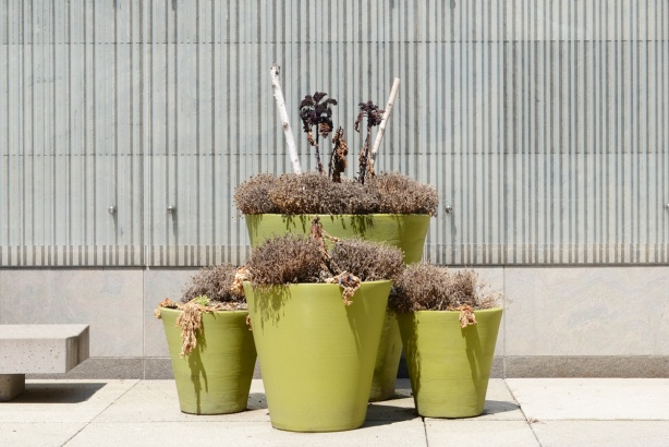 pale lime green planters in front of a concrete building, with dead plants in them.