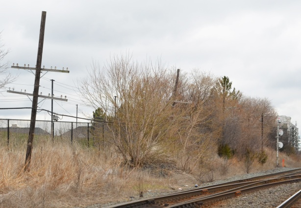 along the railway tracks, shrubs, and an old wood utility pole with glass knobs