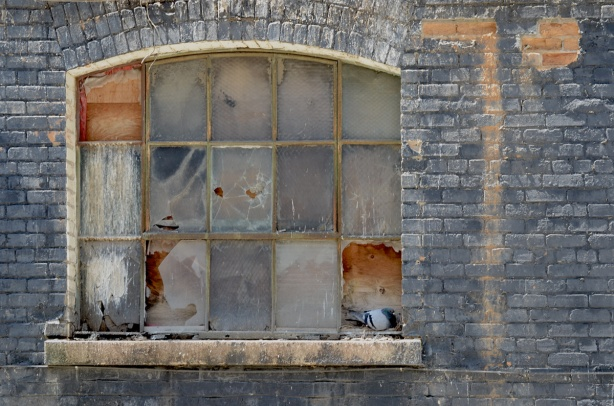a slightly arched window in an old brick building. Some panes of glass are gone and holes boarded up with plywood. Other panes are cracked. A pigeon rests on the window ledge by a gap in the window