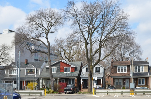 line of houses on a street by Broadview subway station, very tall trees with no leaves, semis, one is painted red