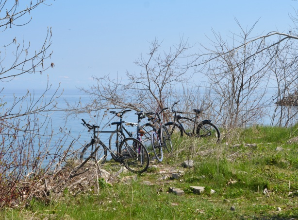 4 bikes parked on the shore, among leafless shrubs, beside Lake Ontario