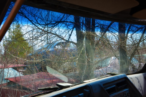 junked, old cars, McLeans Auto Wreckers, looking through the windshield of a car, with other cars in view