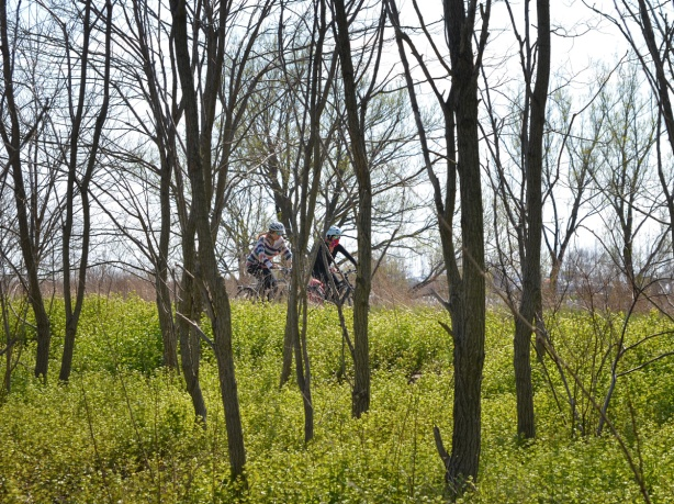 cyclists on a bike path, seen through tree trunks and long grass