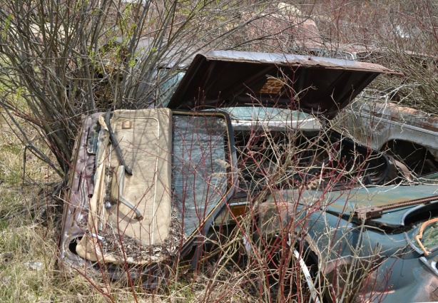 junked, old cars, McLeans Auto Wreckers, overgrown vehicles