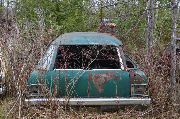 junked, old cars, McLeans Auto Wreckers, back of a green station wagon, overgrown, rusted, no glass in windows