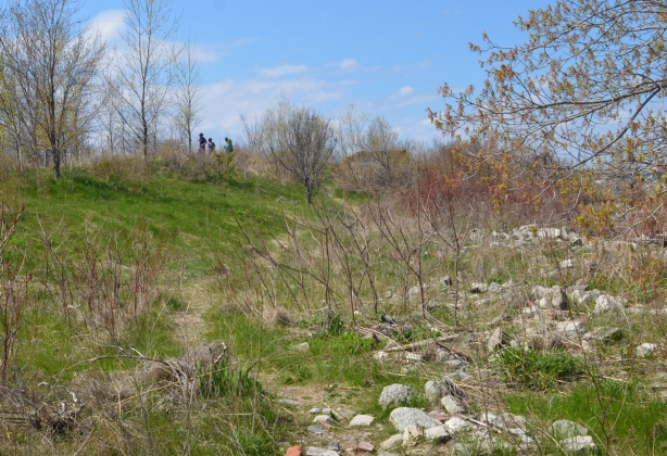 grassy, rocky part of Tommy Thompson Park in spring with shrubs and trees just starting to bud
