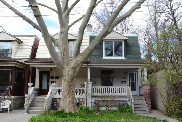 semi divided house with large sycamore tree in front of it