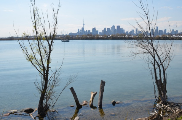In the foregeound, trees and stumps in the water at the edge of the harbour, looking across the water to the Toronto skyline