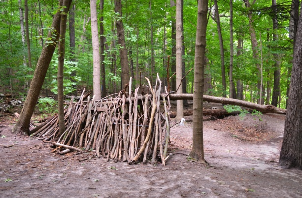 a lean to built in a ravine off many fallen branches