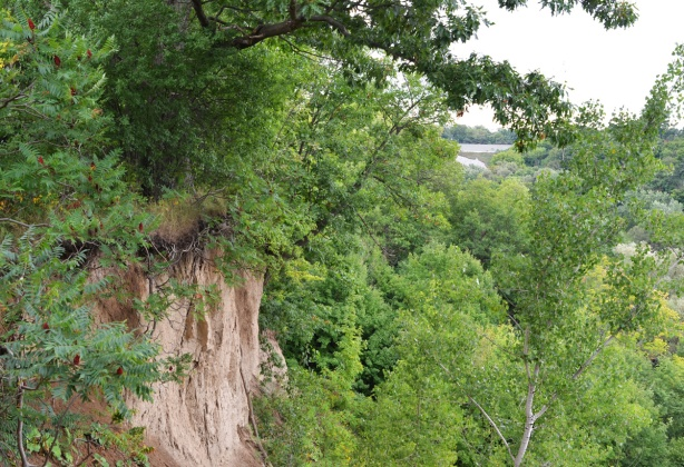cliff and trees at Gwendolen Park