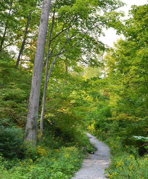 a dirt path through the woods, some yellow hues in the trees