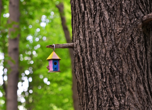 a very small bird house with a bronw plastic insect glued onto the side, hanging from a large tree