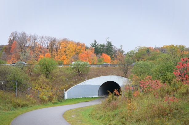 semi circular arch and tunnel under the DVP from the East Don trail, autumn with fall colours on the trees, paved path, grass beside,