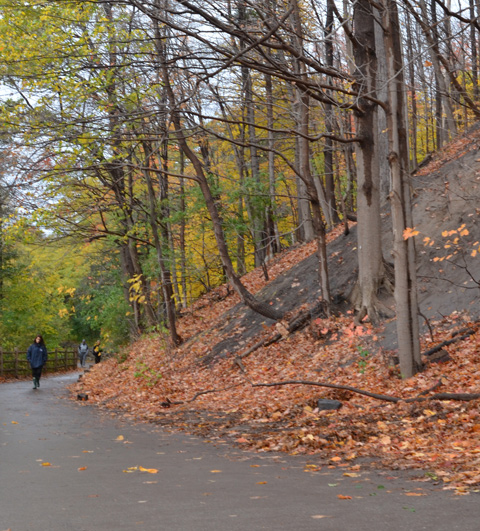 a woman walks along a path at the bottom of a hill. the hill is covered with leaves that have fallen off the tall trees