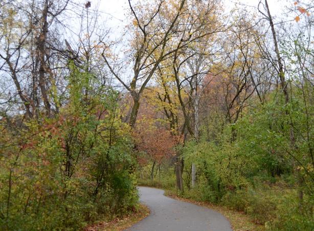 path through the woods, autumn