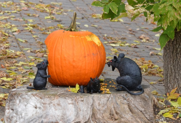 4 fake black rats eating a pumpkin