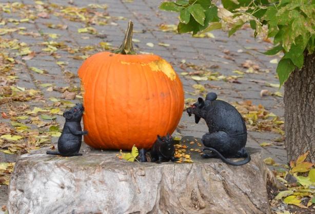 4 fake black rats eating a pumpkin