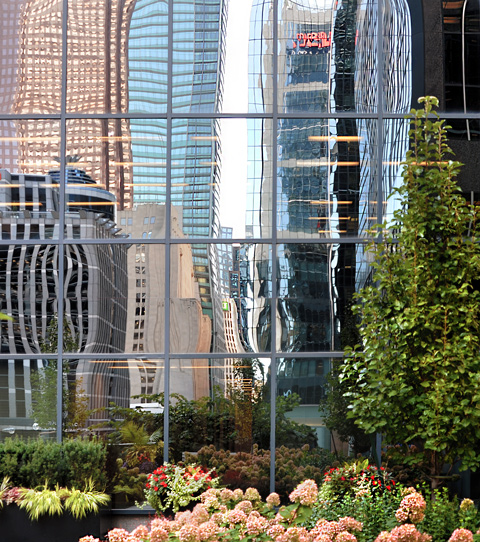 in a rooftop garden, with glass building beside and reflections in those windows
