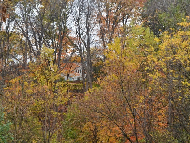 a white house up on a hill behind autumn trees that are starting to lose their leaves