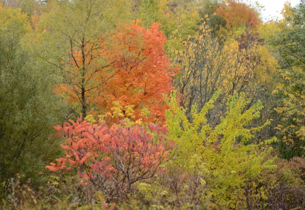autumn colours in the leaves on the trees, oranges and golds, and some red sumach