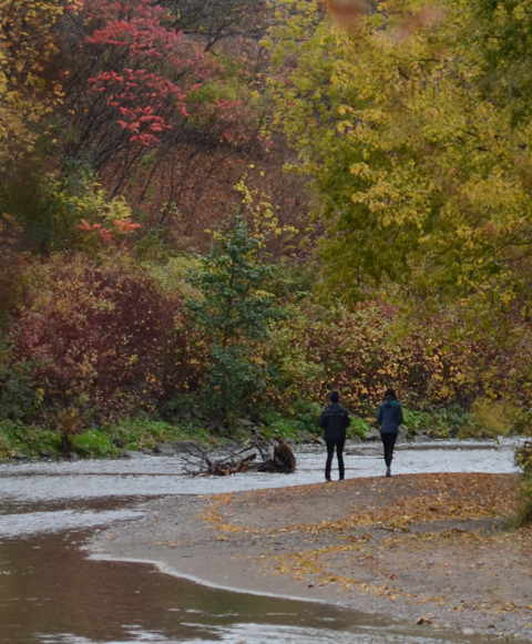 2 people walk on the sandy river bank on the side of the Don River, autumn with leaves in different shades of red and gold